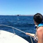 Mobulas saltando fuera del agua