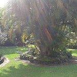 backyard panorama