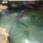 обиталище крокодилов