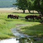 Trek horses - beautiful.
