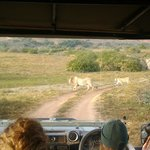 Yay - we saw the lions!