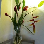 Heliconias caribe