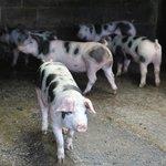 Foto de Pickersgill Manor Farm