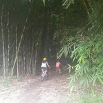 Bike tour entering the bamboo forrest