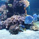 the aquarium (part of)