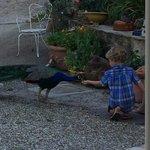 Feeding Robbie the Peacock
