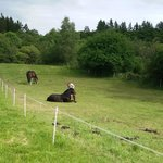 Les chevaux nous accueillent