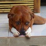 Georgie -- a fierce watchdog. :)