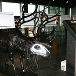 Reindeer sculpture from the Icelandic hair and make up artist Ásgeir Hjartarson called Hellraise