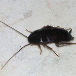 What the roach in the bathroom looked like