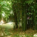 bosque de bambu del jardin