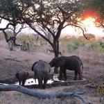 Elephants at Tarangire Tree Tops Pool
