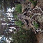 beautiful tree stump on grounds