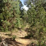Natural Paths