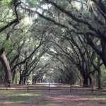 Loved the oak trees and Spanish moss!