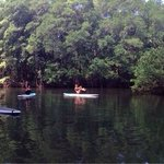 Yoga on paddleboards in the mangroves