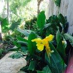 Gardens of Casa Lucia