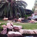 I fenicotteri del Flamingo