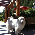 Maggie the winery guard, pretty and playful!