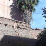 Muro com palmeiras