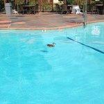 Un intruso en la piscina