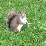 Squirrels in Regents Park