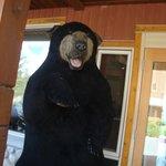 bear outside lobby