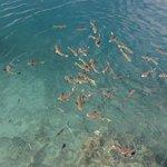 poisson du lagon