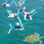 Amazing Turtles