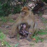 les singes de coin