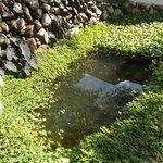 Pond outside room