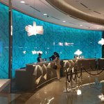 Reception Desk with Changing Colour Wall