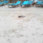 собаки спят в песке )