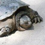surprise sighting - turtle having fun in the sun