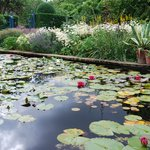 The Lily Pool