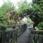 Walkway to The Ark