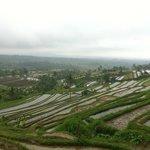 Rainy rice terraces after harvest