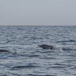 Dolphin safari tour