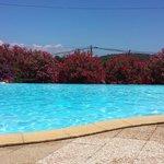 piscine bordée de lauriers