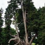 arbre remarquable