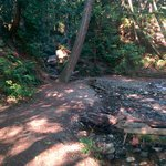 Creeks and train tracks along the trail!