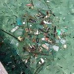 Water is filled with natural debris and rubbish dumped by inconsiderate visitors.
