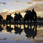 Elephant back safari's on offer close-by...