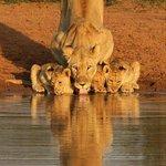 40 mins from Kruger National Park...