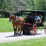 You can take an Amish Buggy ride for $5.00 a piece