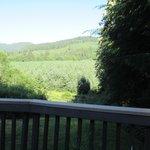 Misty Valley Inn balcony
