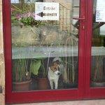 Mur de papyrus et notre chien Haribo pour vous accueillir à La Cyber Taverne