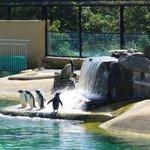 Penguin shower!