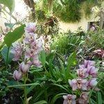 Je jardins à orchidés