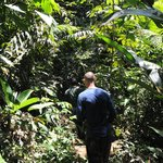 Walking in the real Amazon
